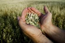 Pour un secteur des semences diversifié et innovant.