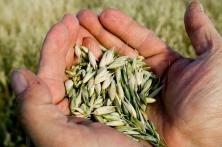 L'agriculture biologique en débat