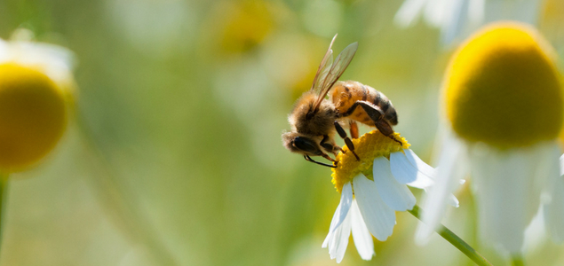 biodiversite-635.jpg
