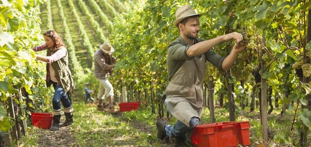 L'emploi saisonnier : enjeux et perspectives