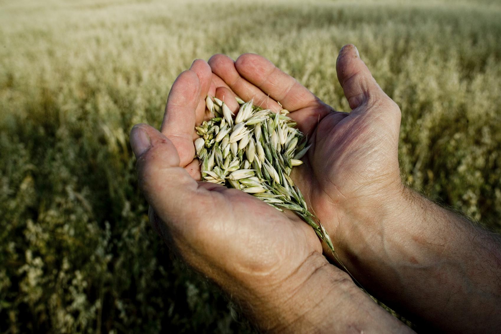Invitation presse – Pour un secteur des semences diversifié et innovant