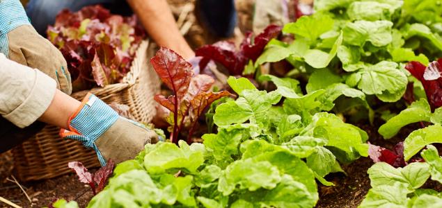 Les projets alimentaires territoriaux, un levier pour une transition écologique partagée. Le cas de l'Albigeois