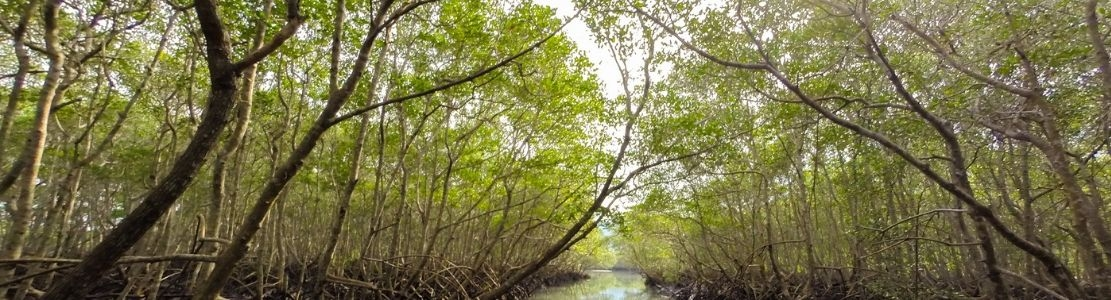 Biodiversité : nouvelle saisine de la Plateforme RSE